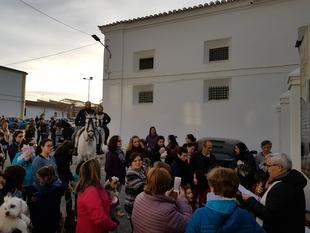 Numerosos animales fueron llevados en Fuente del Maestre a la tradicional bendición por San Antón