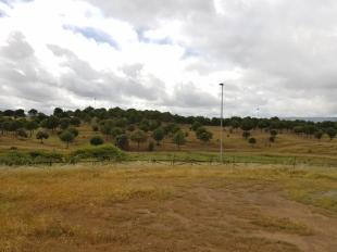 El Ayuntamiento de Fuente del Maestre prohíbe el uso de la finca municipal `Molano´ para acampadas