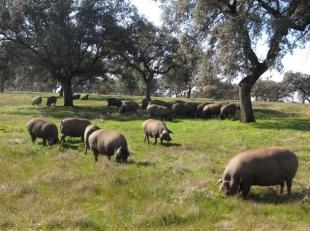 Caja Rural de Extremadura participará en la financiación del centro industrial del ibérico de Zafra