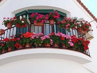 Abierta la exposición virtual del IV Concurso de Ornamentación Floral en Los Santos de Maimona