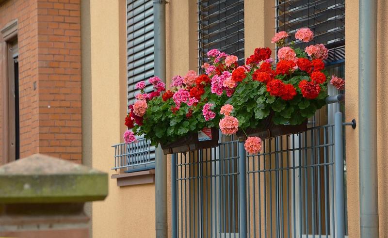 Presentado el I Concurso de Ornamentación Floral de Fachadas y Patios en Medina de las Torres