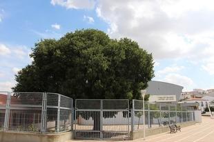 El Ayuntamiento de Los Santos y Paisajes Extremadura suscriben un acuerdo para la conservación del almez de `La Charca´