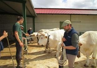 La Junta organiza en la Feria de Zafra una charla informativa sobre ganadería ecológica