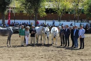La Asociación de Caballos de Pura Raza Española entregó los premios a los mejores animales de los 115 presentados